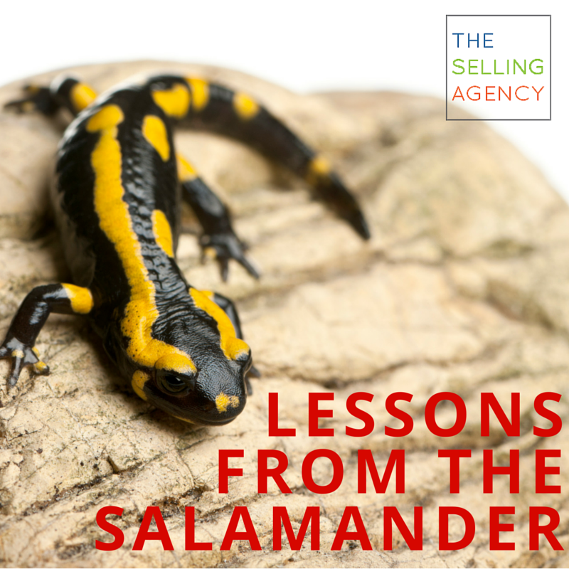 Lessons from the salamander, Sheila C. Johnson's Four Keys to Business Success