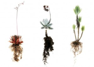 "Your company ""soil"" supports the plants you choose."